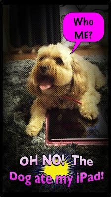Oh no Dog Ate My iPad